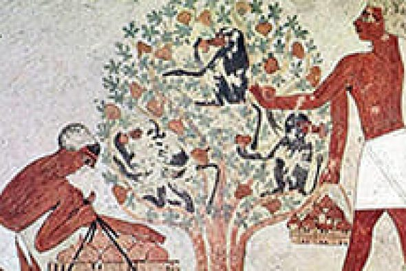 Dried Figs History