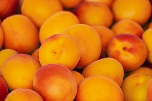 Iran Apricot Manufacturer and supplier