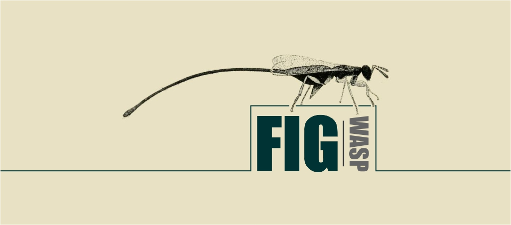 the fig wasp
