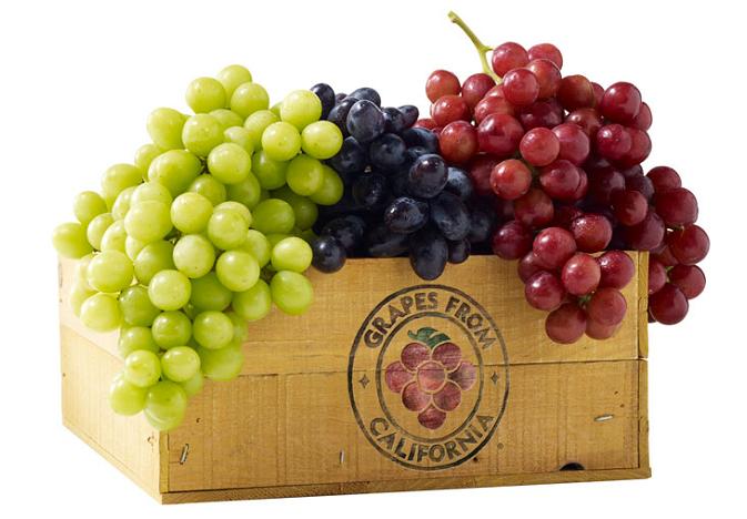 vitis vinifera and Vitaceae the scientific names of grape fruit