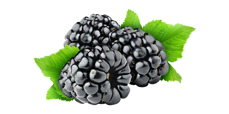 Blackberry » iran dried fruit