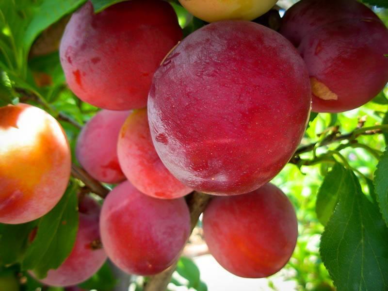 organic sun dried fruit