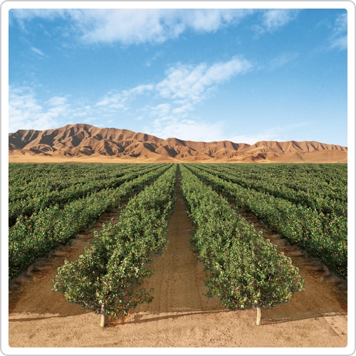 iran dried fruit farms