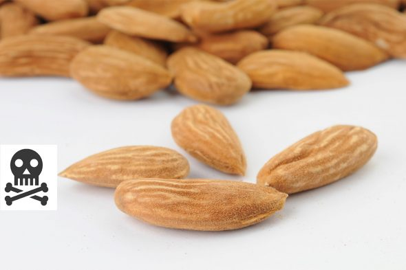 How Many Almonds Can Kill You